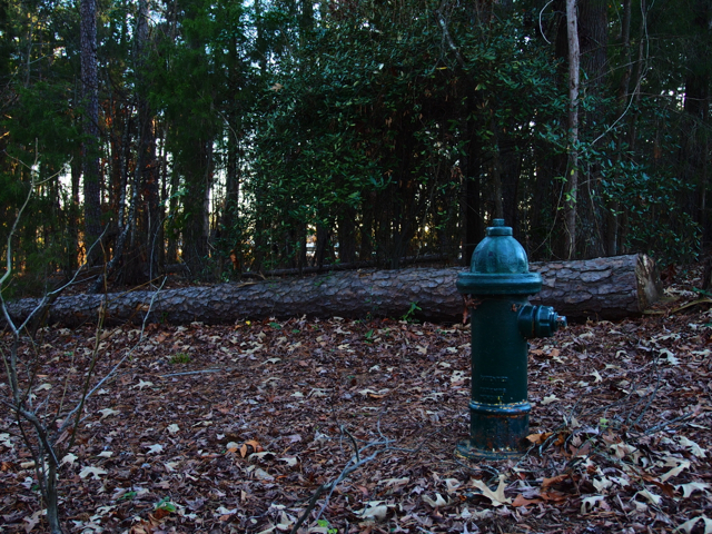 Fire Hydrant In The Woods (Camouflaged?)