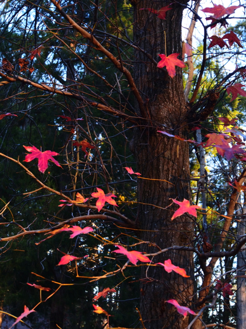 Pretty Leaves Still On The Tree
