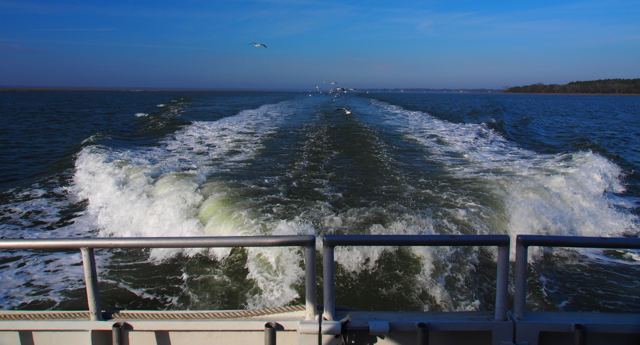 Wake of the boat with hungry seagulls following