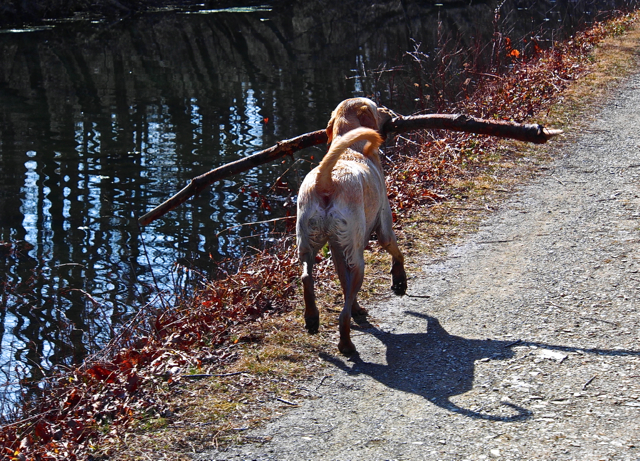 A Happy Dog.....And His Stick!