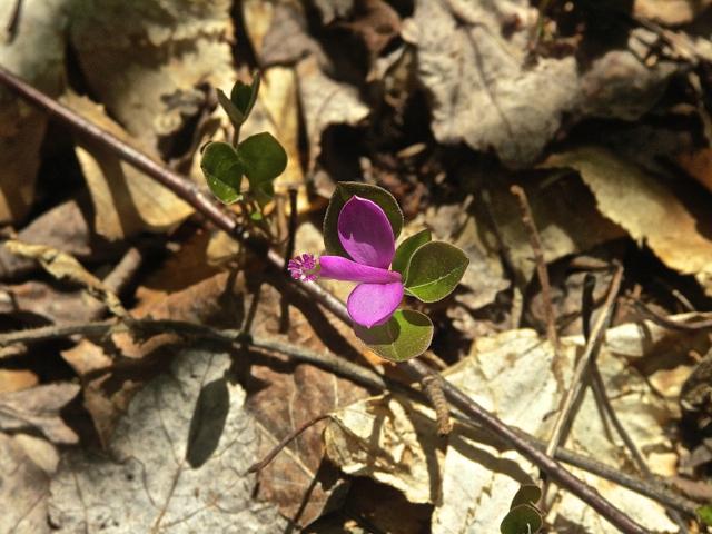 "Spring Wildflower ""GayWIng"""
