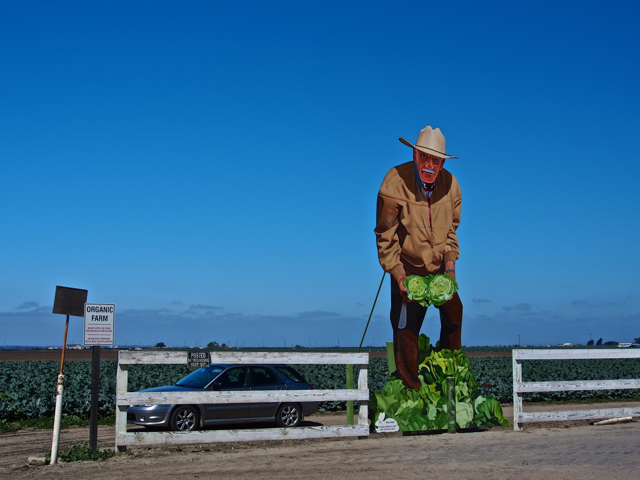 Bigger than life-size Farmer with Lettuce