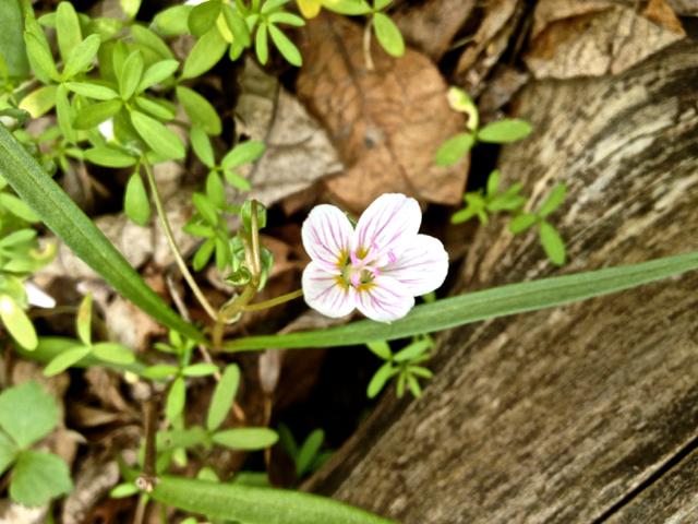 wildflower7