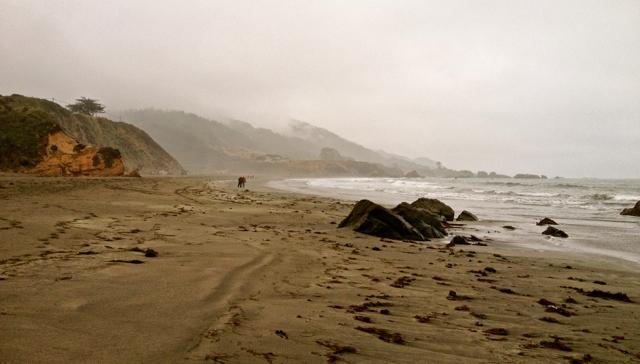 Wild NorCal Beach