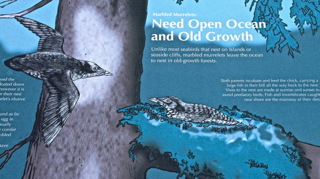 Signage for a rare bird, the Marbled Murrelet