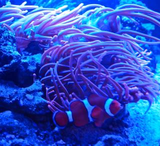 I found Nemo!!!