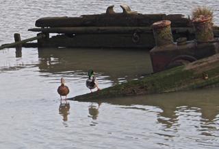 Duck A-Tilt