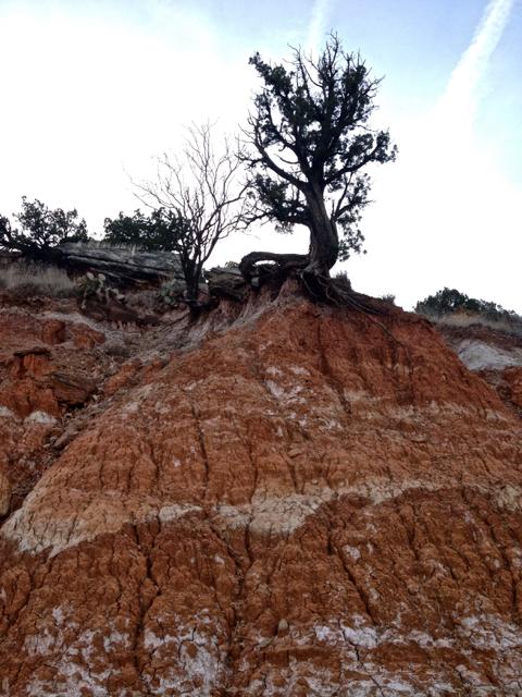 Along the Comanche Trail